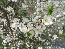 Kaart met de lentebloesem stock foto's