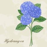 Kaart met hydrangea hortensia Stock Fotografie