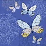 Kaart met Vlinders Stock Afbeeldingen