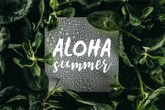 kaart met woorden Aloha Summer, waterdalingen en vers royalty-vrije illustratie
