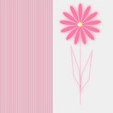 Kaart roze bloem op witte achtergrond Stock Foto's