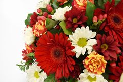 Kaart van de bloem de mooie groet De ruimte van het exemplaar stock foto