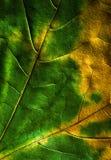 Kaart van de de herfstbladeren Stock Foto