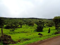 Kaas高原-花谷在马哈拉施特拉,印度 库存照片