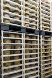 Kaas in een zuivelfabriek royalty-vrije stock foto