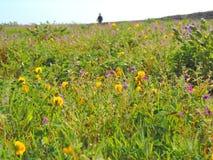 Kaas platå - dal av blommor i maharashtraen, Indien Fotografering för Bildbyråer