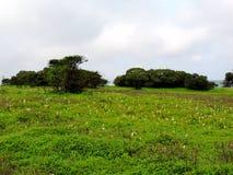Kaas plateau - dolina kwiaty w maharashtra, India obrazy stock