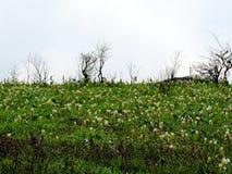Kaasplateau - Vallei van bloemen in Maharashtra, India stock afbeelding