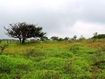 Kaasplateau - Vallei van bloemen in Maharashtra, India stock foto's