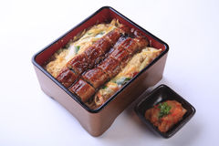 kabayaki in wooden box, Unagi searve as unadon (with rice) isolated on white background royalty free stock photo