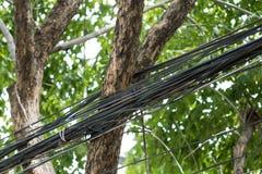 Kabel auf Baum Lizenzfreies Stockbild