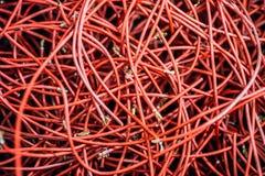 Kabel des Computers und des Internets Stockfotos