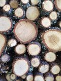 Kabel des Holzes Lizenzfreies Stockbild