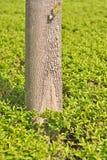 Kabel eines Baums Lizenzfreies Stockbild
