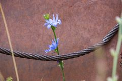 Kabel en bloem royalty-vrije stock fotografie