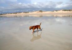 kabel för Australien strandbroome Royaltyfria Foton