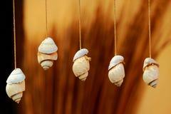 Kabel hangende overzeese shells. Stock Fotografie
