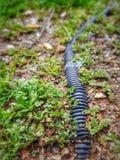 Kabel i växter royaltyfria foton