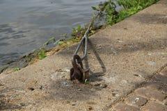 Kabel på flodbanken royaltyfria foton