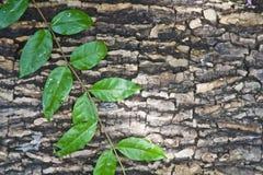 Kabel und Blätter des Baums Stockbild