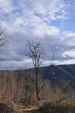 Kabelbil till och med skogen på en kantöverkant Elevatorn till tävla Arkivbild