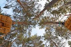 Kabelpark in het Pijnboombos Royalty-vrije Stock Fotografie