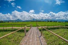 Kabin på grön risfält Arkivfoton