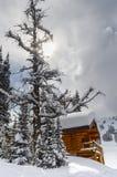 Kabina w śniegu otaczającym evergreens obraz royalty free