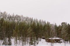 Kabina w Lesie Zdjęcie Royalty Free