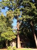Kabine im Holz Stockbilder