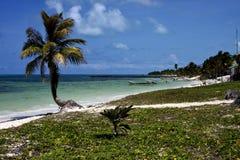 Kabineboote und -palme in der Sian-kaan blauen Lagune Lizenzfreies Stockbild