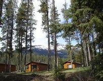 Kabinen in den Bäumen und in der Wildnis Stockbilder