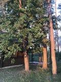 Kabinen im Wald Stockbilder