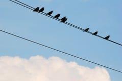 kable ptaków Fotografia Stock
