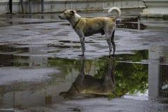 4 kablowy psiej rodziny przyjaciela dom mieści dzierżawiących rok Zdjęcia Royalty Free