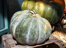 Kabocha Japanese Pumpkin Squash Stock Photo
