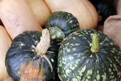 Kabocha Squash and Butternut Squash. For sale at a local grower's market Royalty Free Stock Image