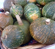 Kabocha squash. Cucurbita maxima, Japanese squash with hard dull green skin with white patches and intense orange colored flesh It is mostly roasted and tastes royalty free stock images