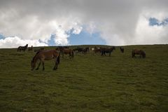 Horses in the beautiful valley of Kabul river royalty free stock photography