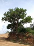Kabwoya Wildlife Reserve scenery Royalty Free Stock Photo