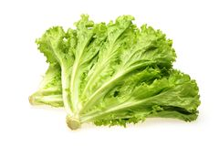 Free Kachan Lettuce With Green Leaves Stock Images - 124945144