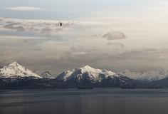 Kachemak Bay with eagle Royalty Free Stock Photography
