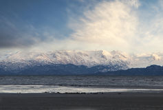 Kachemak Bay in winter with sea otters Royalty Free Stock Photo