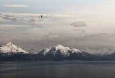 Kachemak-Bucht mit Adler Lizenzfreie Stockfotografie