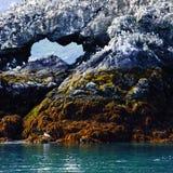 kachemak för ö för alaska fjärdfiskmås royaltyfria bilder