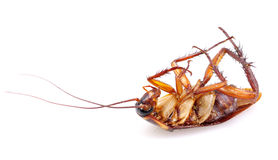 kackerlacka royaltyfri foto