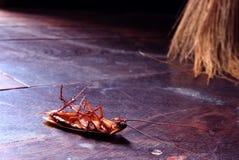 kackerlacka Arkivfoton
