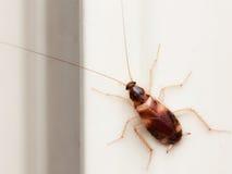 Kackerlackahuset bor arkivbilder