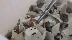 Kackerlackakoloni i zoo stock video