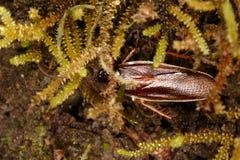 Kackerlackanederlag i växter Arkivfoton